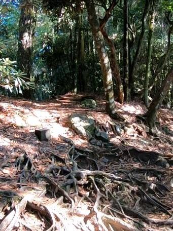 鳶嘴山前半部的路線以木棧道、石階與盤根錯節的自然山徑為主,算平穩好走。